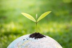 Alberi sul globo, idee ambientali di conservazione, envi del mondo fotografia stock libera da diritti