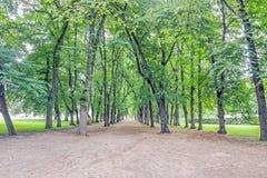 Alberi sul lato del percorso in parco Fotografia Stock Libera da Diritti