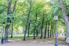 Alberi sul lato del percorso in parco Immagine Stock Libera da Diritti