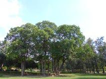Alberi sul parco Fotografia Stock