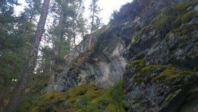 Alberi sul pendio di collina roccioso Immagine Stock Libera da Diritti