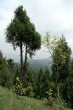 Alberi sul pendio di montagna Fotografia Stock Libera da Diritti