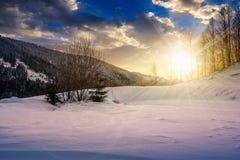 Alberi sul prato nevoso in montagne al tramonto Fotografia Stock Libera da Diritti