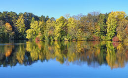 Alberi sul puntello del lago in autunno Fotografia Stock Libera da Diritti