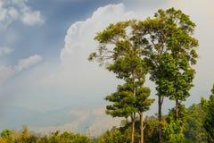Alberi sull'alta montagna e sul cielo Fotografia Stock Libera da Diritti