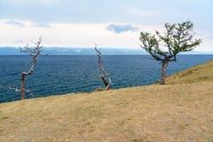 Alberi sull'isola di Olkhon Lago Baikal La Russia Fotografia Stock