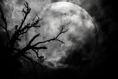 Alberi sull'ombra spaventosa di notte della luna Fotografia Stock