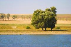 Alberi sulla banca di fiume Fotografia Stock
