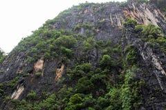 Alberi sulla collina Immagine Stock