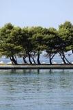 Alberi sulla linea costiera Fotografia Stock Libera da Diritti