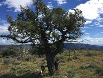 Alberi sulla montagna di Wilson Immagine Stock Libera da Diritti