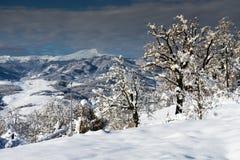 Alberi sulla neve con la montagna Immagini Stock Libere da Diritti