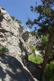 Alberi sulla roccia Fotografia Stock Libera da Diritti