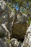 Alberi sulla roccia Fotografie Stock
