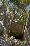Alberi sulla roccia Fotografie Stock Libere da Diritti