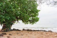Alberi sulla spiaggia Fotografie Stock