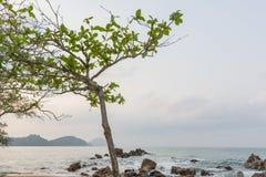 Alberi sulla spiaggia Fotografia Stock Libera da Diritti