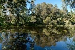 Alberi sulla sponda del fiume Fotografia Stock Libera da Diritti