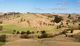 Alberi sulle colline asciutte Fotografie Stock Libere da Diritti