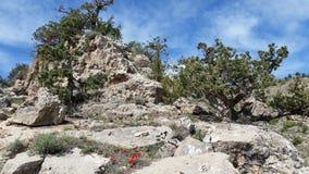 Alberi sulle rocce Immagini Stock