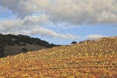 Alberi superiori della collina nelle vigne immagini stock