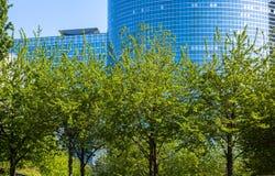 Alberi sviluppati alti davanti alla costruzione dell'alta carica Immagine Stock