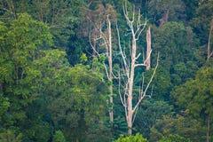 Alberi tropicali del backgorund di verde della giungla thailand fotografia stock