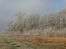 Alberi in un'atmosfera di inverno Fotografie Stock