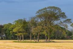 Alberi in un campo nel pomeriggio Fotografie Stock