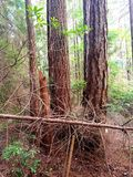 4 alberi un ceppo Fotografia Stock