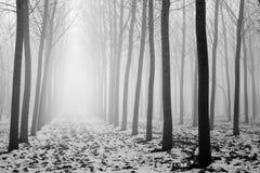 Alberi in un giorno nebbioso Fotografia Stock