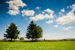 Alberi in un giorno nuvoloso di estate Fotografia Stock