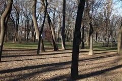 Alberi in un parc Fotografie Stock Libere da Diritti