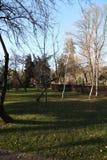 Alberi in un parc Fotografia Stock Libera da Diritti