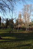 Alberi in un parc Immagine Stock