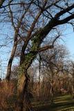 Alberi in un parc Fotografia Stock