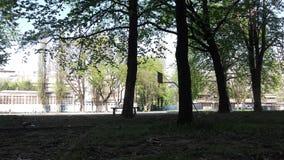 Alberi in un parco fotografie stock