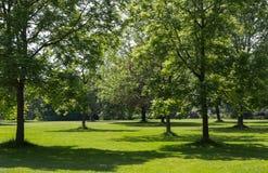 Alberi in un parco Fotografia Stock Libera da Diritti