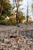 Alberi in un parco della città Immagini Stock Libere da Diritti