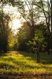 Alberi in un parco della città Fotografie Stock Libere da Diritti