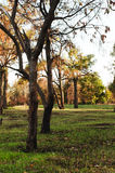 Alberi in un parco della città Immagine Stock Libera da Diritti