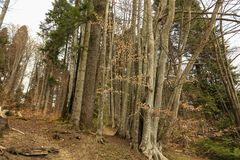 Alberi in una foresta Fotografie Stock Libere da Diritti
