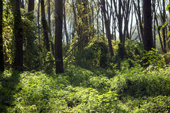 Alberi in una foresta, stagione di caduta Fotografie Stock