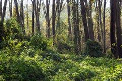 Alberi in una foresta, stagione di caduta Fotografia Stock Libera da Diritti