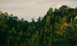 Alberi in una montagna Immagini Stock