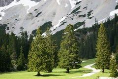 Alberi in valle alpina Fotografia Stock Libera da Diritti