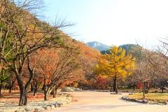 Alberi variopinti in autunno Immagini Stock