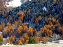 Alberi variopinti coperti di neve, Italia Immagine Stock Libera da Diritti