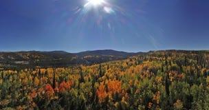 Alberi variopinti della montagna di Colorado in autunno fotografia stock libera da diritti