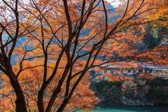 Alberi variopinti di autunno su una riva del fiume di fronte alle zone residenziali Immagini Stock Libere da Diritti